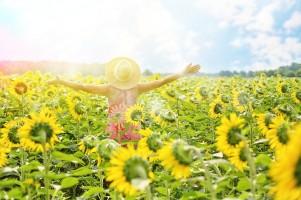 sunflowers-3640938_1281